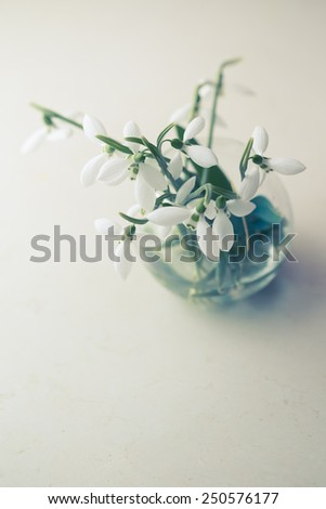 Common Snowdrop (Galanthus nivalis), close up - stock photo