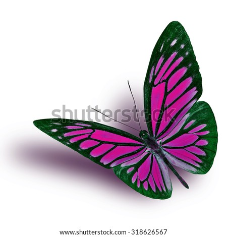 Common Wanderer (Pareronia anais) the beautiful flying pink butterfly on white background with soft shadow beneath - stock photo