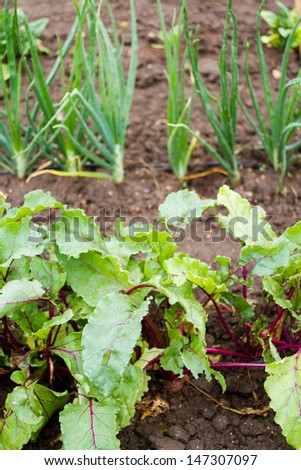 Community gardening in urban community. - stock photo