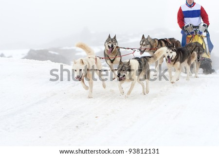Competition sport of sled dog race on snow in winter. - stock photo
