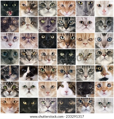 composite picture of group of purebred cats - stock photo