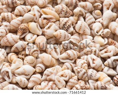 composition of exotic shells isolated on a white background closeups - stock photo