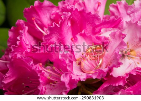 composition with wedding rings and flowers of pink rhododendron - stock photo