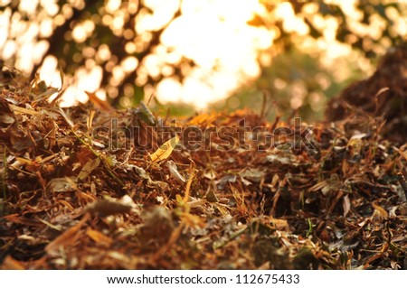 Compost, organic natural leaves. - stock photo