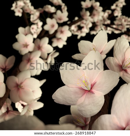 Computer generated imagery of cherry blossom or sakura flower isolated on the black background.  The subject is back lit to reveals its beautiful pinkish translucency. - stock photo