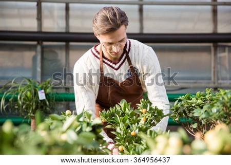 Concentrated man gardener in brown apron taking care of small trees in greenhouse - stock photo
