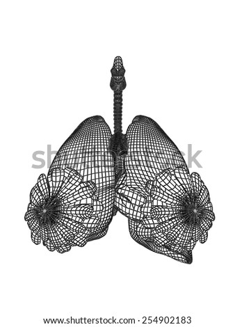 Concept conceptual anatomical human woman 3D wireframe mesh respiratory system  with lungs breasts isolated on white background, for anatomy, medical, body, biology, health, care, mammary or pulmonary - stock photo