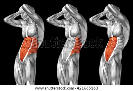 Concept 3D chest human anatomy or anatomical and muscle set collection isolated on black background metaphor to body, tendon, spine, fit, abs, strong, biological, gym, fitness, skinless health medical - stock photo