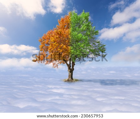 Concept for diversity - Single tree with green and red leaves above the clouds at the idyllic sunny day - stock photo