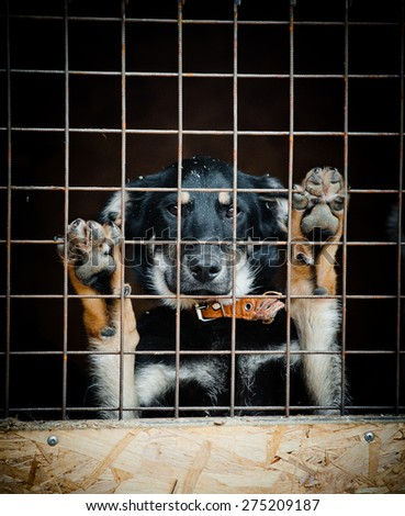 Concept: Homeless dog in dog shelter behind the fence waiting for new home - stock photo