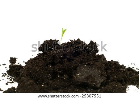 Concept image of a new beginning with some new plant growth coming out of a mound of soil, isolated against a white background - stock photo