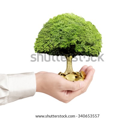 Concept of money growing from plant coins - stock photo