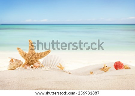 Concept of summer beach with starfish and shells  - stock photo