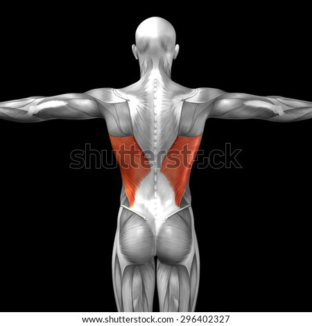 Concept or conceptual 3D back human anatomy or anatomical and muscle isolated on black background metaphor to body, tendon, spine, fit, abs, strong, biological, gym, fitness, skinless, health medical - stock photo
