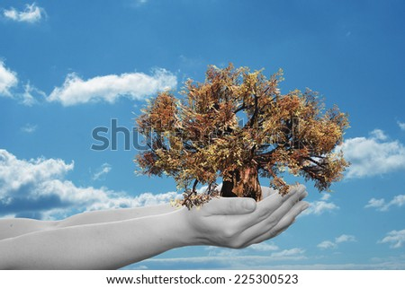 Concept or conceptual human man or woman hand holding a brown autumn tree and blue sky with clouds ecology background for environment, growth, eco, protection, conservation, organic, bio, love, energy - stock photo