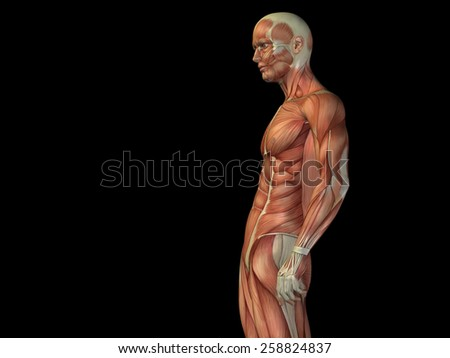 Concept or conceptual human or man 3D anatomy body with muscle isolated on background, metaphor to medicine, sport, male, muscular, medical, health, medicine, biology, anatomical strong fitness design - stock photo
