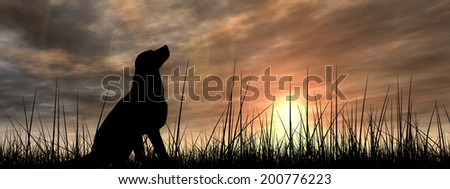 Concept or conceptual young beautiful black cute dog silhouette in grass or meadow over a sky at sunset landscape background banner - stock photo