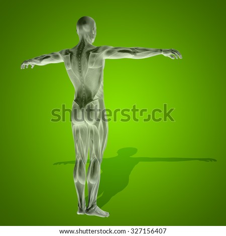 Concept strong human man 3D anatomy body with muscle for health sport over green background for medicine, sport, male, muscular, medical, health, medicine, biology, anatomical, strong fitness design - stock photo