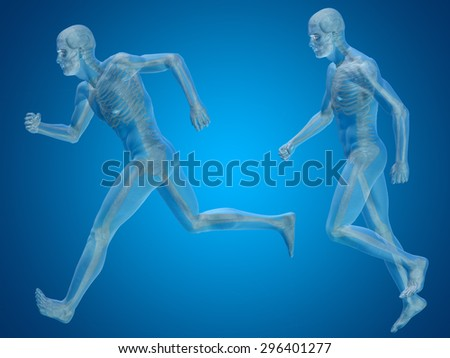 Conceptual 3D human man or male skeleton anatomy transparent body on blue gradient background for anatomy, body, biology, medicine, muscle, bones, muscular, anatomical, science, education, sport x-ray - stock photo