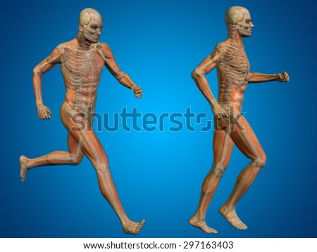 Conceptual 3D human man or male skeleton anatomy transparent body on blue gradient background for anatomy, body, biology, medicine, muscle, bones, muscular, anatomical science education sport or x-ray - stock photo
