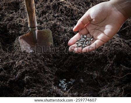 conceptual of hand plant and sunflowers seed in to plantation soil with gardening tool use for growing and planing to future - stock photo