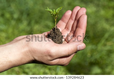 Conceptual photo of a man holding young plant - stock photo