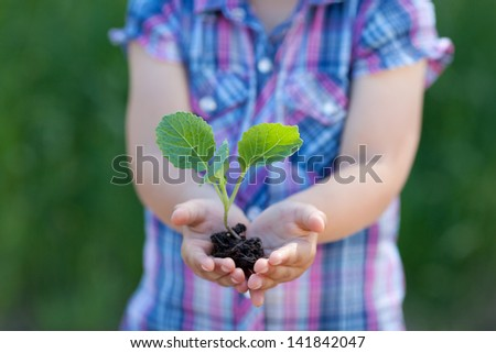 Conceptual portrait of child hands holding a little plant - stock photo