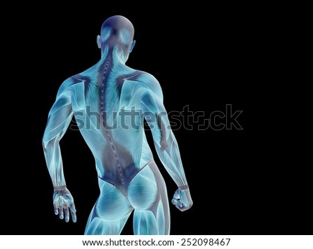 Conceptual strong human or man 3D anatomy upper body with muscle for health or sport on black background  as a metaphor for anatomy, body, medicine, muscle, bones, muscular, science, education, sport - stock photo