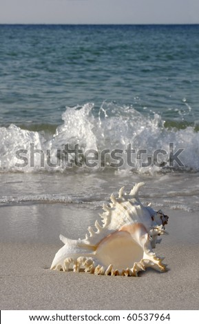 Conch Shell on Gulf of Mexico Beach (vertical) - stock photo