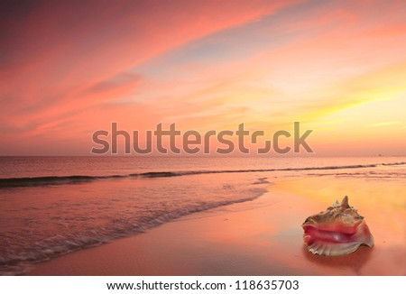 Conch Shell on the Beach at Sunset - stock photo