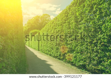 Concrete path with green hedges trimmed in the shape of a square on a background of blue sky and clouds. Toned - stock photo