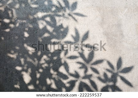 Concrete Surface with Shadow of Tree Leaves Casting on It. - stock photo