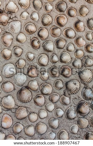 Concrete wall made from seashells glued in rows - stock photo