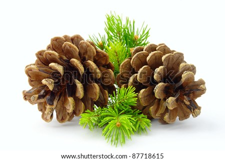 cone and pine branches on a white background - stock photo