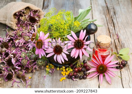 coneflowers and dill in mortar, vial with essential oil on wooden plank, herbal medicine - stock photo