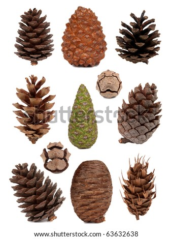 Cones collection - stock photo