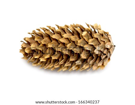 cones of spruce on white background - stock photo