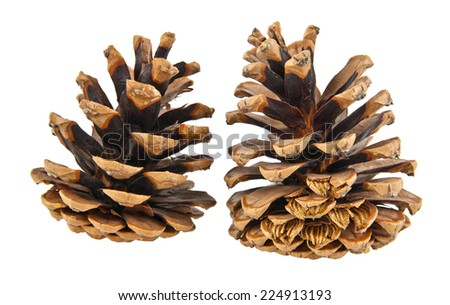 cones on a white background - stock photo