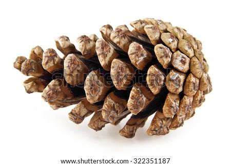 cones on white background - stock photo