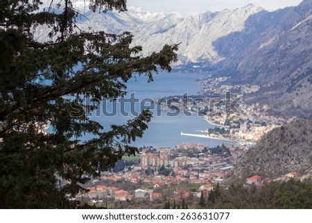 Conifer and bay - stock photo