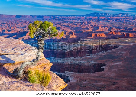 Conifer tree growing on the outcrop in Canyonlands National Park in Utah - stock photo
