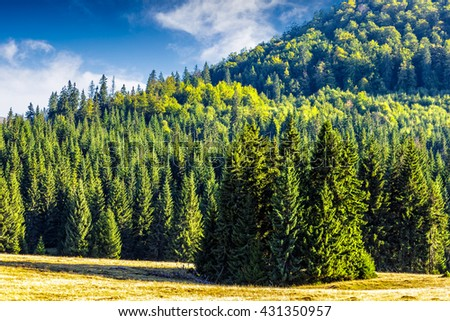 coniferous forest on a steep mountain hillside - stock photo