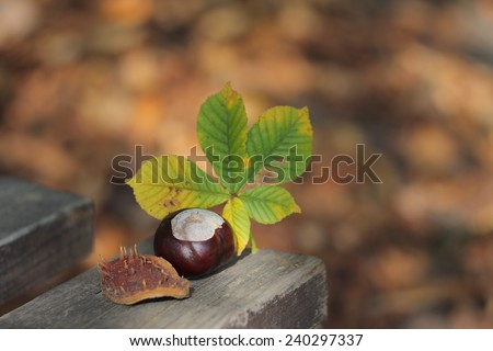 conker and leaf on bench in autumn park in sunny day - stock photo