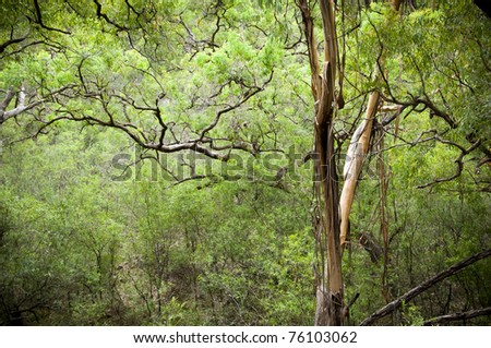 Conservation background - canopy in dense, lush forest - stock photo