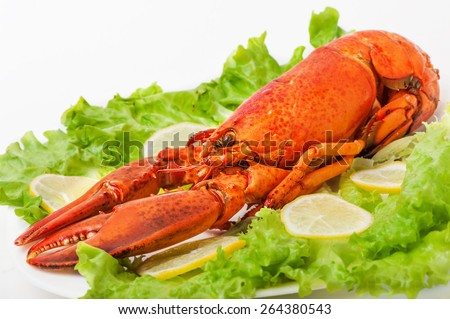 Cooked and boiled red lobster in a white plate with lemon and green lettuce - stock photo