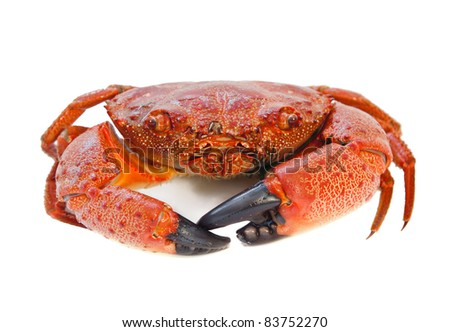 Cooked Crab isolated on white - stock photo