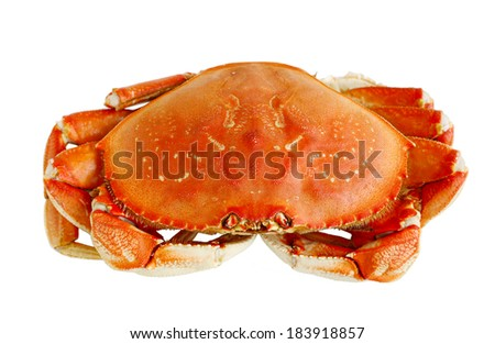 Cooked Dungeness crab isolated on white background - stock photo