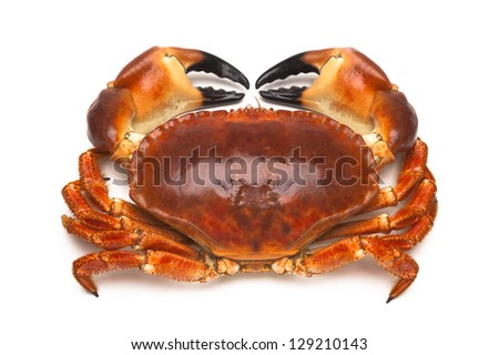 Cooked edible crab (Cancer pagurus). - stock photo