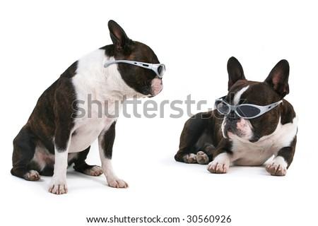 cool dogs - stock photo