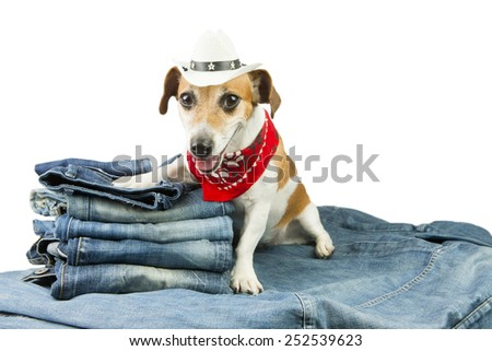 Cool fashionable denim dog in the set of jeans things - stock photo
